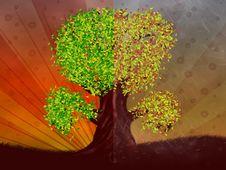 Free Autumn And Summer Season Tree Royalty Free Stock Photos - 27440768