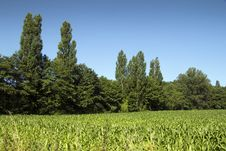 Free Green Scene Stock Image - 27441051