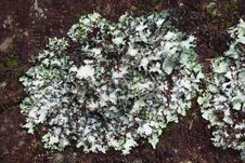 Free Lichen On The Red Rock Stock Photography - 27442482