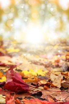Free Red Leaf Royalty Free Stock Photo - 27443145