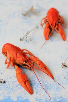 Free Crawfish Royalty Free Stock Photo - 27444495