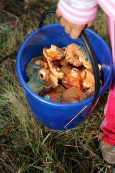 Free Bucket Of Mushrooms Royalty Free Stock Photography - 27445487