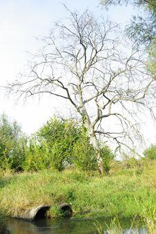 Free Dead Tree Stock Photography - 27447142