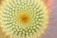 Free Top Of Yellow Tower Cactus Stock Photo - 27448940