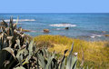 Free Mediterranean Shoreline With Vegetation. Royalty Free Stock Photos - 27455978