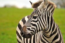 Free A Zebra S Portrait Royalty Free Stock Image - 27453486