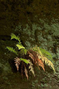 Free Fern On A Rock Royalty Free Stock Images - 27460969