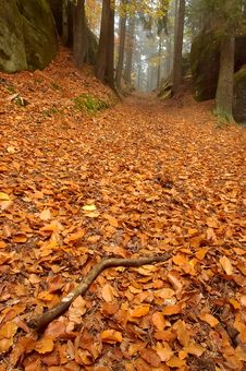 Free Forest Path With A Tree Royalty Free Stock Images - 27460989