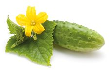 Free Cucumber With Flower Stock Photography - 27461812