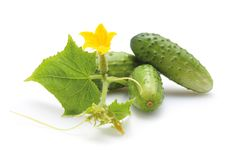 Free Green Cucumbers Stock Image - 27461891