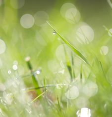 Free Grass Stock Photography - 27464942