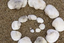 Free Shells Royalty Free Stock Photos - 27468188
