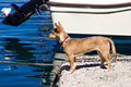 Free Dog In Harbor Stock Images - 27478964