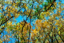 Free Autumn Forest Royalty Free Stock Photography - 27470757
