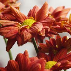 Free Beautiful Red Flower Stock Photo - 27470950