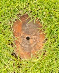 Free Stump In Green Grass. Stock Photography - 27470982