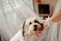 Free Faithful Dog Stock Images - 27483624