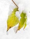 Free First Snow Royalty Free Stock Photos - 27487878