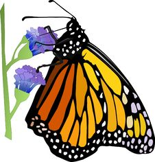 Free Butterfly On Purple Flower Royalty Free Stock Photos - 27482448