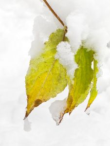 Free First Snow Royalty Free Stock Photos - 27487878