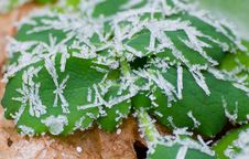 Free Icy Morning Dew Stock Photos - 27489963
