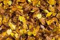 Free Autumn Leaves Stock Photo - 27497270
