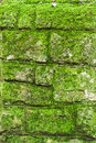 Free Moss Wall Royalty Free Stock Photos - 27497468