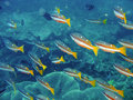 Free Tropical Coral Reef Fish Stock Photo - 2750240
