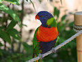 Free Beautiful Exotic Bird Royalty Free Stock Image - 2751446