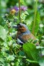 Free Bird In Grass Stock Image - 2753291