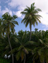 Free Palms On A Tropical Island 2 Royalty Free Stock Photography - 2754517