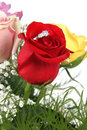 Free Ring In Rose Stock Photo - 2759390