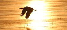 Free Crane Silhouette Royalty Free Stock Photos - 2752248