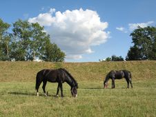 Free Horses On A Pasture Stock Photo - 2752460