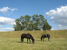 Horses On A Pasture Stock Photo