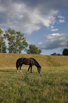 Horse Grazed Stock Photography