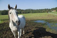 Free White Horse + Space Royalty Free Stock Photos - 2752688