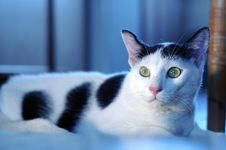 Free Cat Alert Royalty Free Stock Photography - 2752807