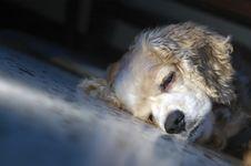 Free So Sleepy Stock Photography - 2752872