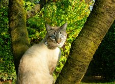 Cat In A Tree Royalty Free Stock Photography