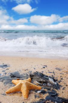 Free Starfish On Rocks Stock Images - 2754954