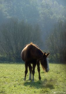 Free Grazimg Chestnut Horse In Back Light Royalty Free Stock Photo - 2755175