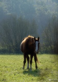 Free Chestnut Horse In Backlight Stock Photos - 2755263