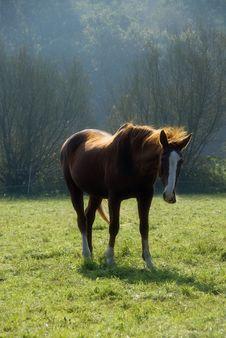 Free Chestnut Horse Grazing Royalty Free Stock Photo - 2755345