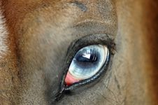 Free Horse Eye Royalty Free Stock Image - 2756806