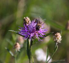Free Bee Stock Photography - 2756812