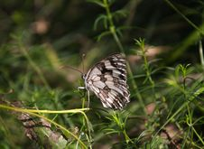 Free Butterfly Royalty Free Stock Photography - 2756817