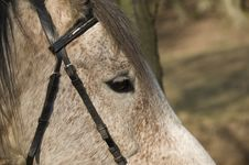 Free Horse Face Closeup Stock Photography - 2756872