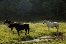 Free Brown, Black & White Horse Stock Photography - 2757132