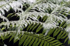Free Ferns Stock Photography - 2757212